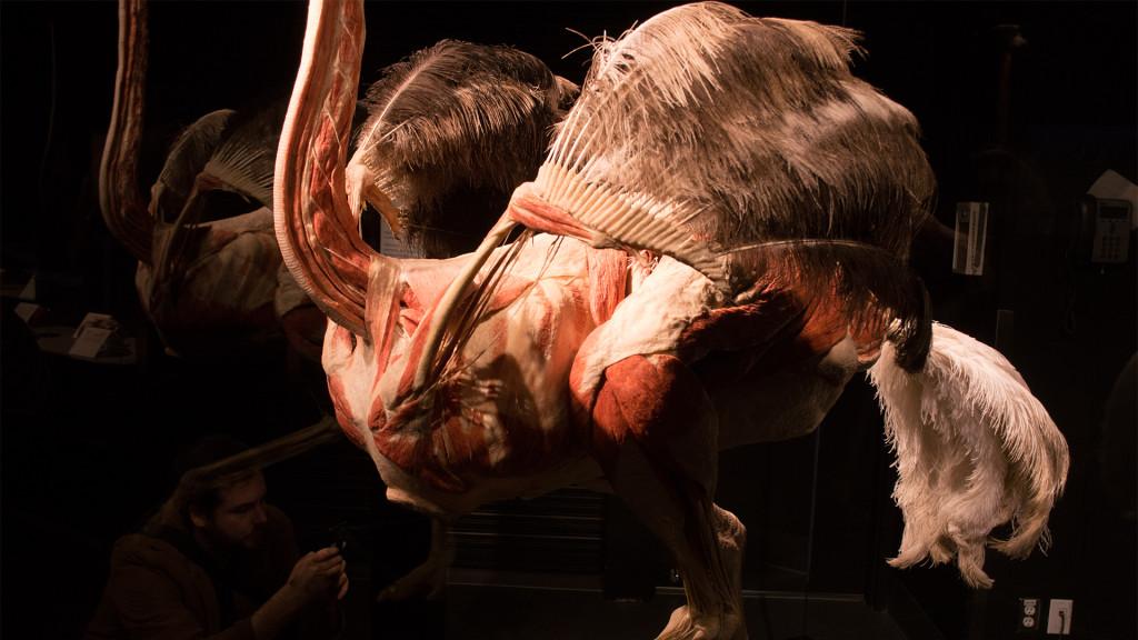 ian-nakamoto-emu-anatomy-scan