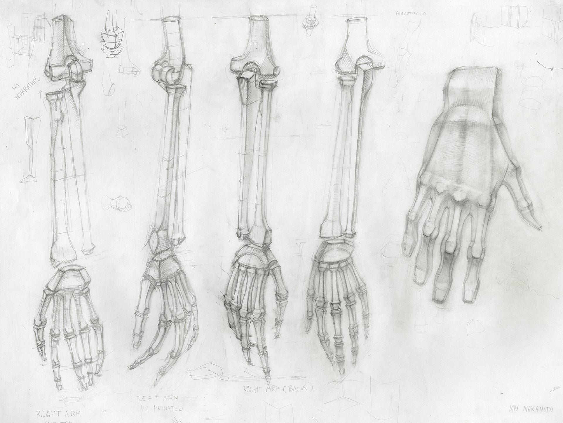 Ian-Nakamoto-Planar-Drawing-Academic-Study-Hands-1920