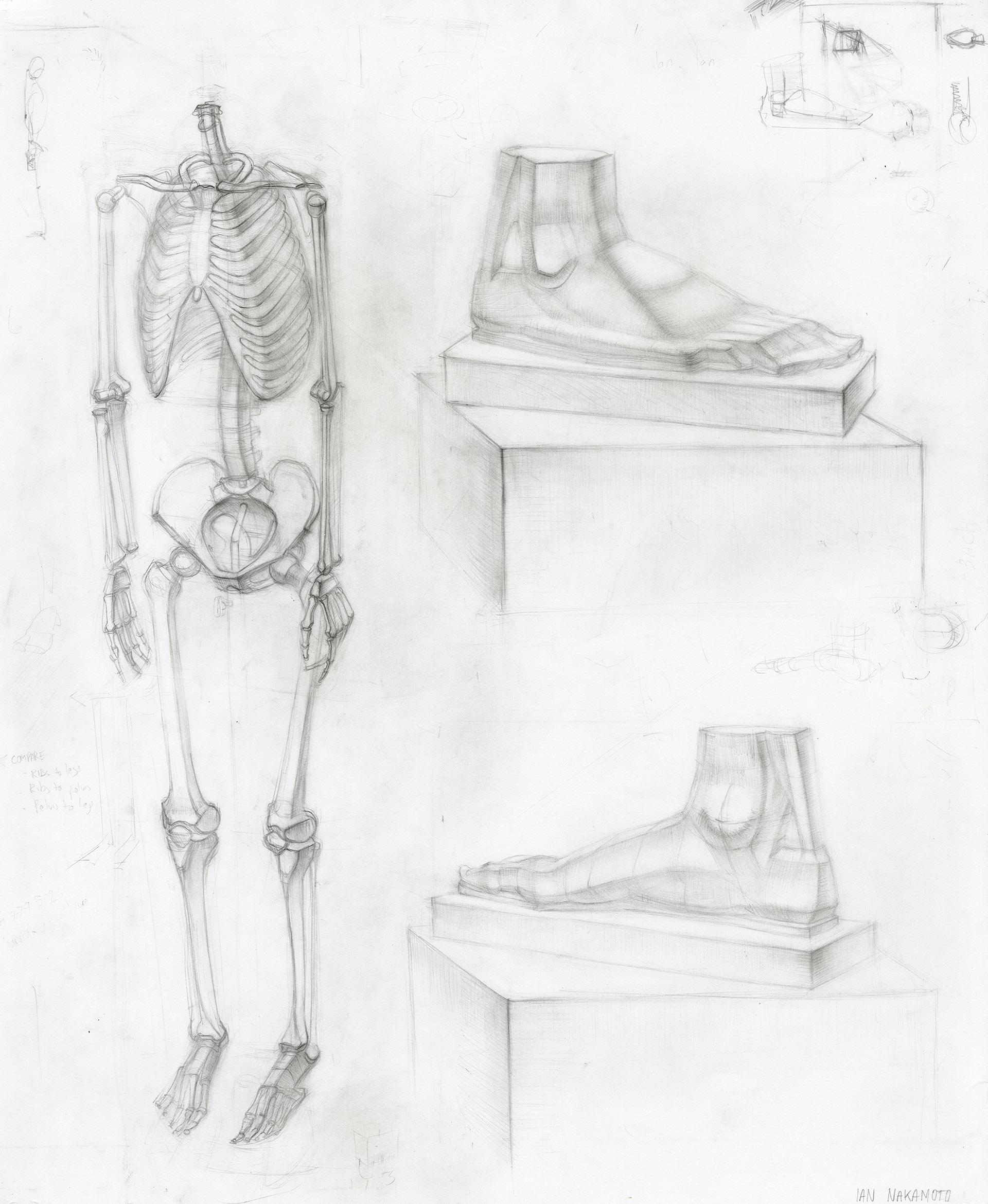 Ian-Nakamoto-Planar-Drawing-Academic-Study-Skeleton-Feet-Cast-1920