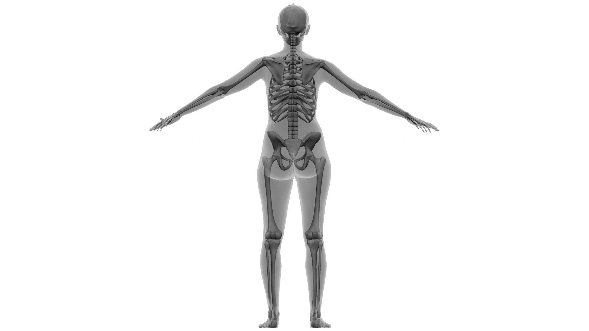 Ian_Nakamoto_Mel_Keiser_Skeleton_render_2